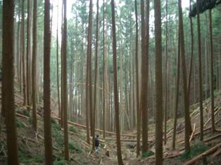 20060408-2.jpg