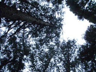 20060408-3.jpg
